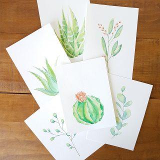 Aqurelles succulentes