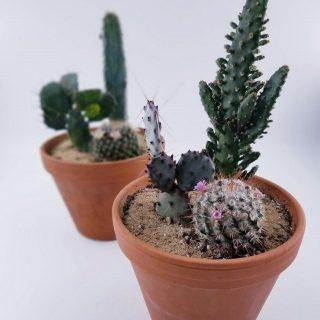 Jardins de cactus